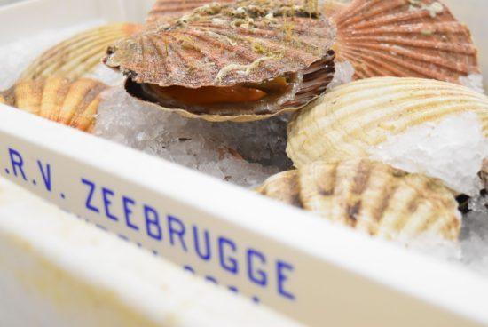 Met Carrefour en Filip Claeys naar de visveiling in Zeebrugge