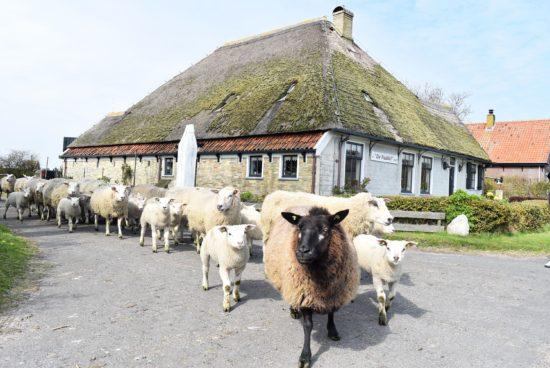 Culinair Texel - Waddeneiland - Must visits