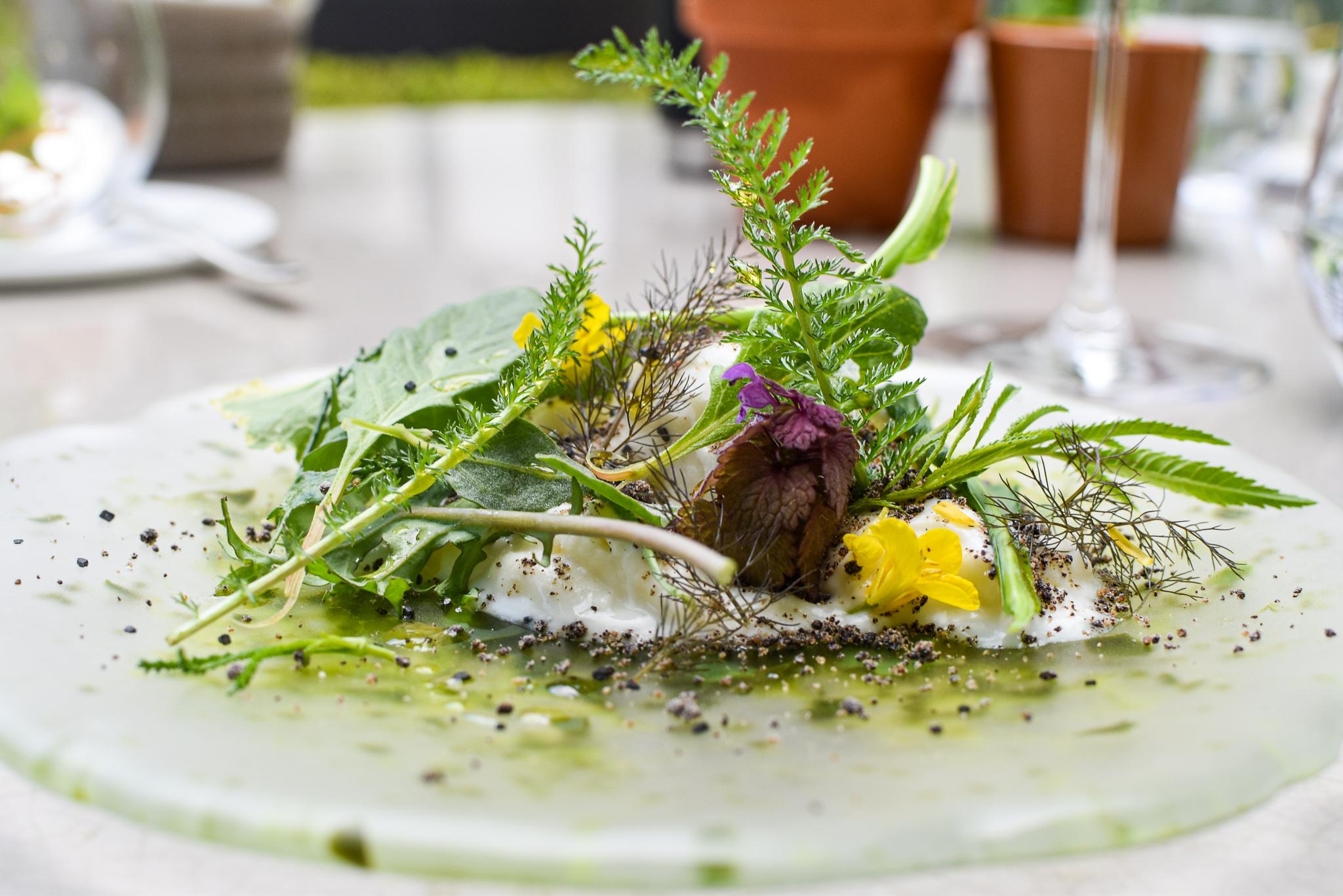 Boerderij en tuin - jonge groenten - tuinkruiden - zoute geitenmelksorbet